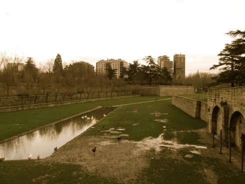 Parque de la Taconera, geese, ducks