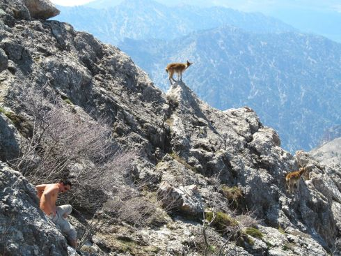 Monte Treveque, Spain, Sierra Nevada, España, hiking, ibex
